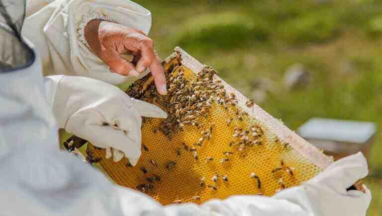 Küresel ısınma balcıları vurdu; milyonlarca arı öldü