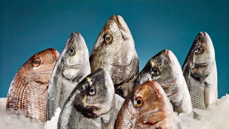 Kahramanmaraş'tan 54 ülkeye balık ihracatı