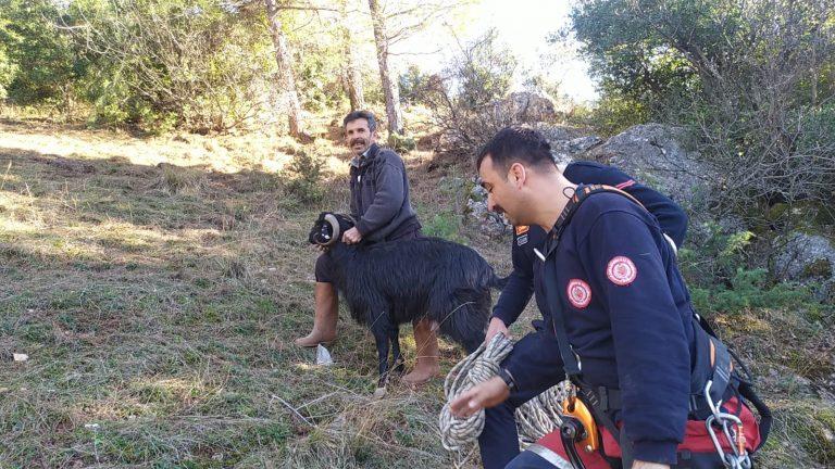 Kayalıklarda mahsur kalan keçinin imdadına kurtarma ekipleri yetişti