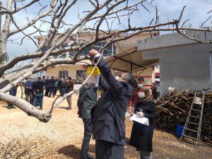 Kahramanmaraş'ta Fıstık Ağaçları İçin Biyoteknik Mücadele