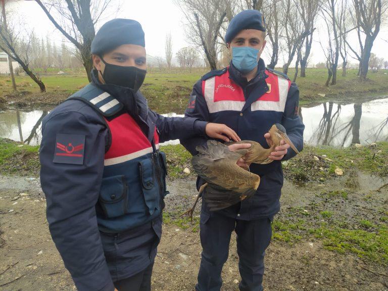 Jandarma'dan Balıkçıl Kuşu Kurtarma Operasyonu