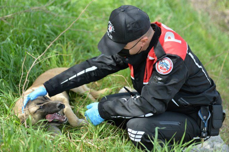 Kahramanmaraş polisi sokak hayvanlarını unutmadı