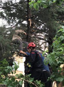 Ağacı Budamak İsterken Fenalaştı