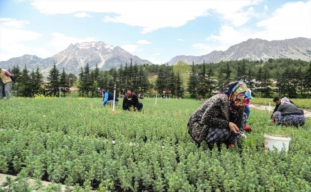 Kahramanmaraşlı Kadınlar Türkiye'ye Nefes Oluyor