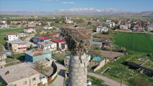 Elbistan'da Leyleklerin 67 Yıldır Adresi Değişmiyor