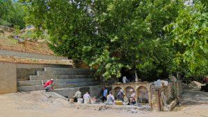 812 yaşındaki Çınar Ağacı Koruma Altında