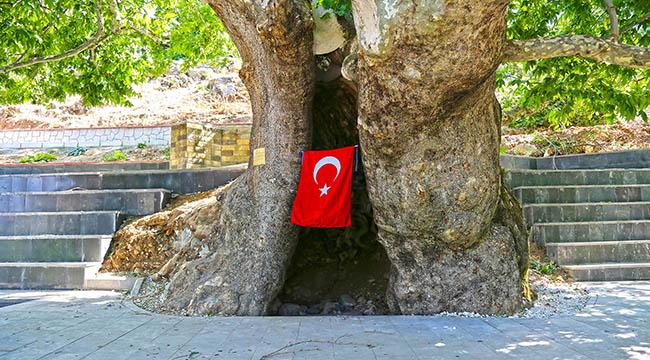 Asırlık Çınar Turizme Kazandırıldı