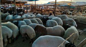 Kahramanmaraş'ta arife günü kurban pazarlıkları sıkılaştı